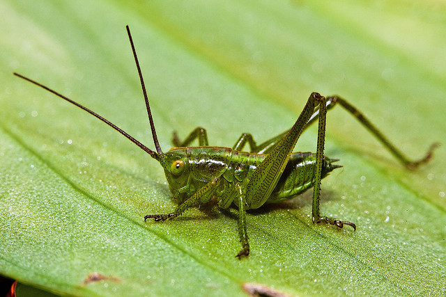 this cricket knows you can do better.